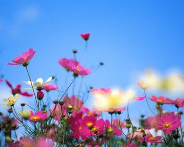 秋の訪れを肌で感じるミニベロ散歩を楽しみましょう!9月のミニベロ試乗会&イベント情報